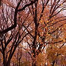 Central Park in the fall by AaronHillebrand