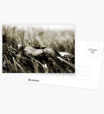 The Simple Things Postcards