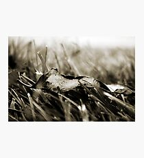 The Simple Things Photographic Print