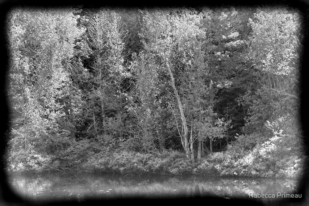 Mysitc Forest by Rabecca Primeau