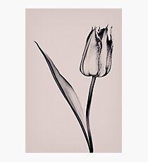 Toned Photographic Print