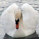 Swan. by saoirse breheney
