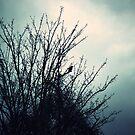 Black Bird by Stephanie Hillson