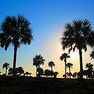 Palm Landscape by Loewin