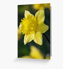 Daffodil 3 Greeting Card