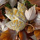 Autumn Leaves by Stephen D. Miller