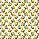 apricots by fourretout