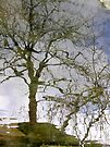 tarn's tree by dinghysailor1
