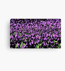 Lilac Tulips  Canvas Print