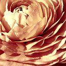 Petals by Julie Moore
