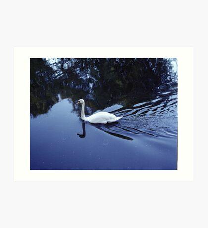 Swan at Nature Reserve Wandsworth,  Photography Art Print