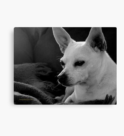 Lil' Bit~ Peace At Last~One Year Later Canvas Print