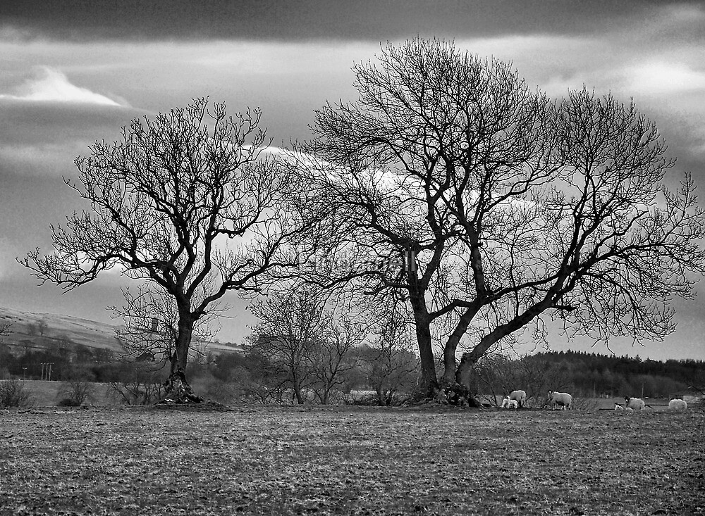 Swaledale Trees by Lindamell