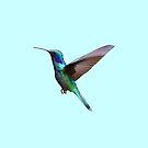 Hummingbird in Flight  by kierkegaard