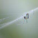 Weaver by Bob Hardy