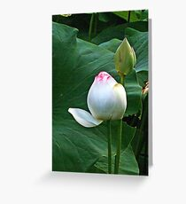 Lotus Lily, Waiting To Burst into Full Bloom Greeting Card