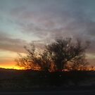 Beautiful sunset glow by Donna Steele