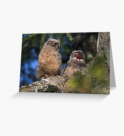 Owlet Siesta Greeting Card