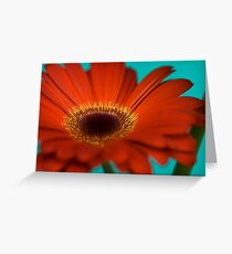 Red Gerbera II Greeting Card