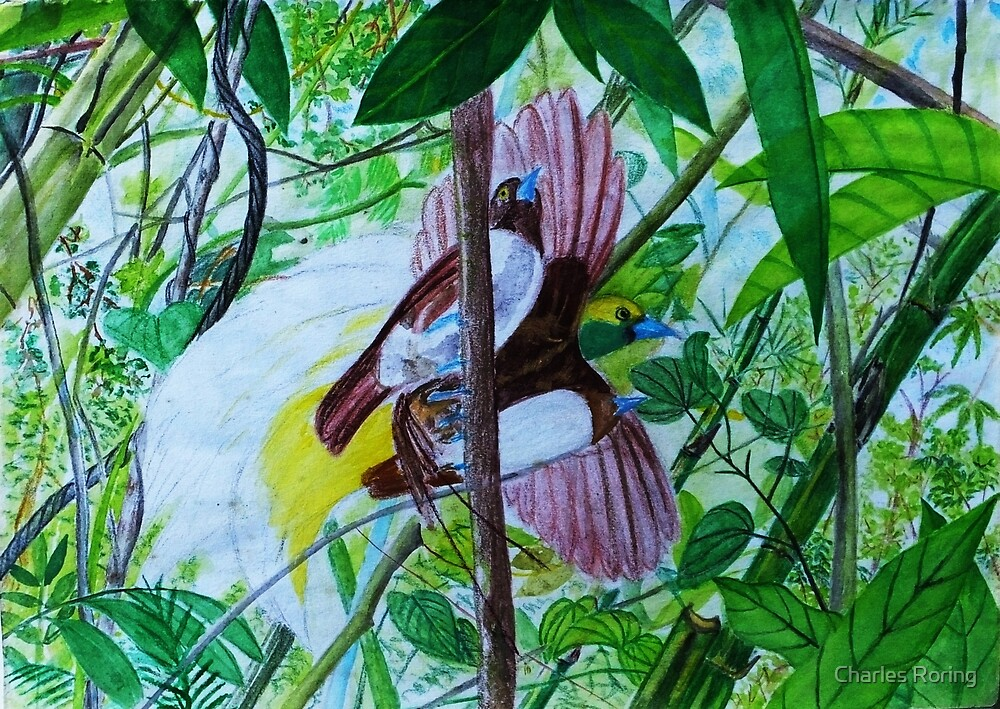 Paradise Birds in Watercolor by Charles Roring