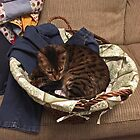 Helping with the laundry by Margaret Shark
