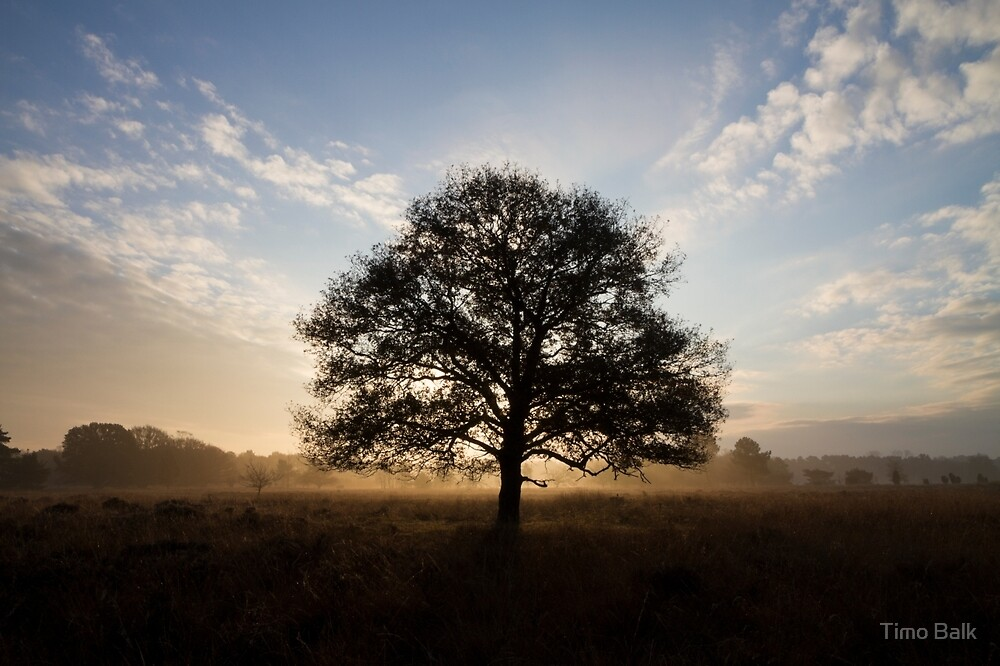 That Tree in the Heathland by Timo Balk