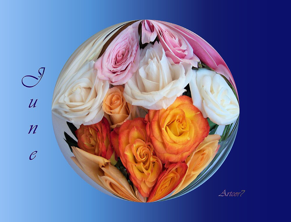 June Roses by artcor7