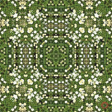D1G1TAL-M00DZ ~ FLORAL ~ Rose Carpet 2 by tasmanianartist 170219 by tasmanianartist