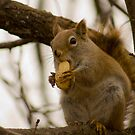 Crushed Nuts by Sean McConnery