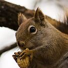 Crushed Nut 3 by Sean McConnery