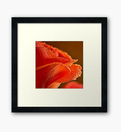 Raindrops on Salmon Rose Framed Print