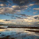 Seagull Flock Disturbed by Heather Prince
