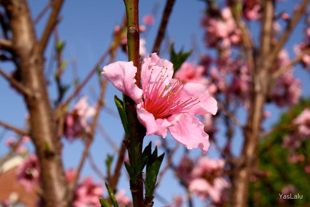 Pretty in Pink by YasLalu