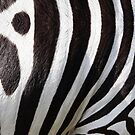 "«""Pop Safari 01 Zebra""» de MarCanton"