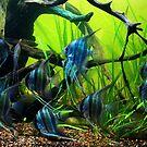 California Academy of Sciences Aquarium I. San Francisco 2010 by Igor Pozdnyakov