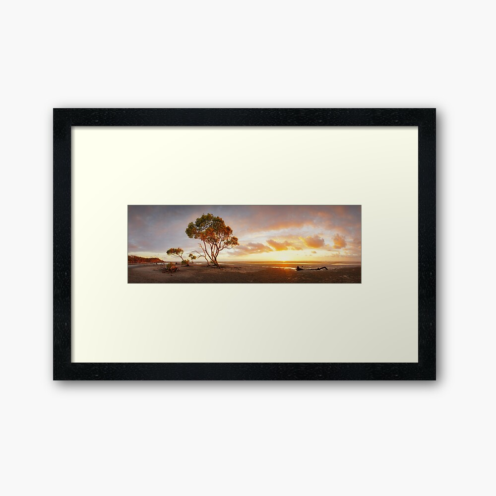 Mangrove Trees, Moreton Bay, Queensland, Australia Framed Art Print