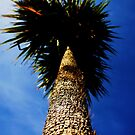 One Tree  by Adam Jones