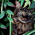 Hiding in the Bushes -Version 2 by Heather Friedman