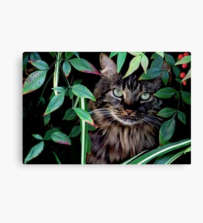 Hiding in the Bushes -Version 2 Canvas Print