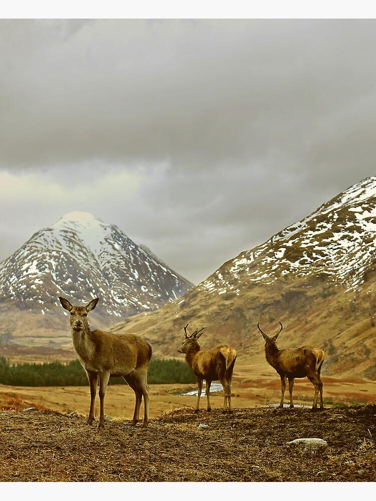 Deer by tontoshorse