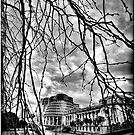 Parliament Buildings by RONI PHOTOGRAPHY