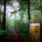 Appalachian Trail Magic by Cecilia Carr