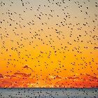 A Sky Full of Birds by Irina Chuckowree