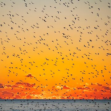 Un cielo lleno de pájaros de chuckirina