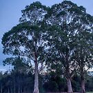Morning Trees by Michael McGimpsey
