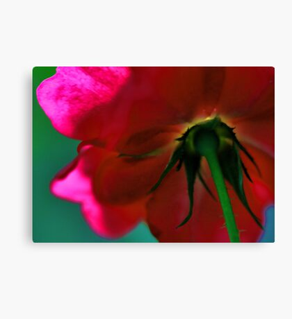 Beneath The Beauty Lies The Thorns Canvas Print