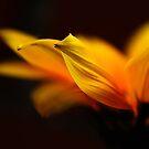 my little sunshine by Ingrid Beddoes