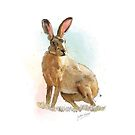 PCD2637-HARE-A3 by Jackie Werner