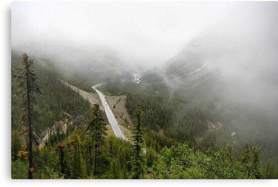 Driving in a Fog by Teresa Zieba
