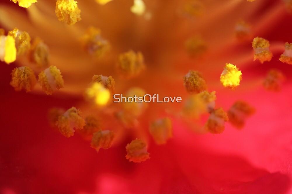 Sunlit Pollen by ShotsOfLove